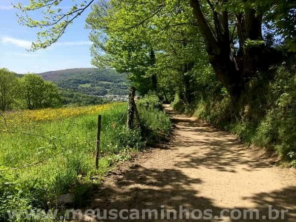Foto da trilha mostra árvores no lado direito, a trilha de chão batido e vegetação rasteira do lado esquerdo. Este é o trecho entre Pasantes e Triacastela.